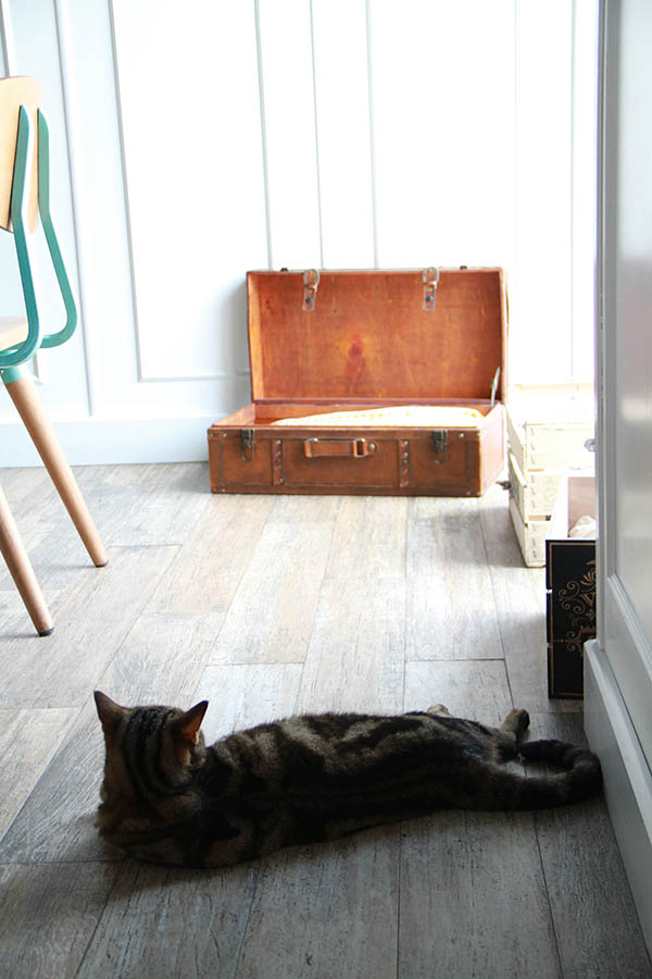 Un gatto sdraiato all'interno del  Romeow Cat Bistrot